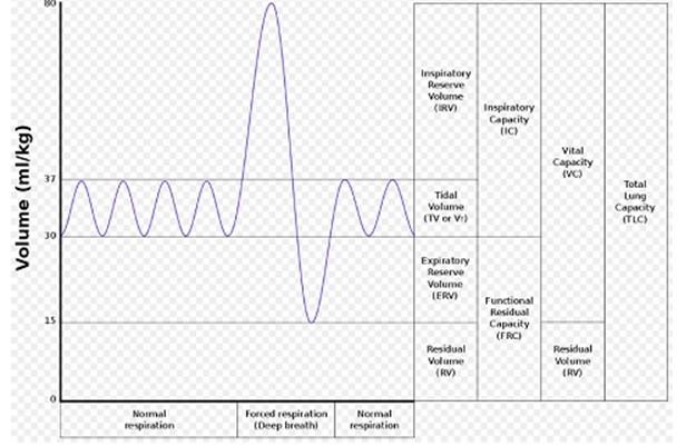 Interpreting a Spirometer Trace
